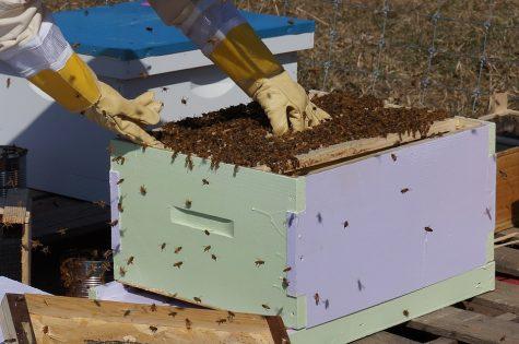 Bee Blown Away at the Buccaneer Bee Company